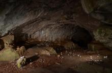 Die Feldhofhöhle ist eine Kulturhöhle im Hönnetal zwischen dem Balver Ortsteil Binolen und der Hemeraner Burg Klusenstein